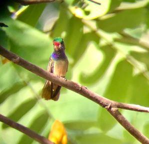 Bird Lover's Morning