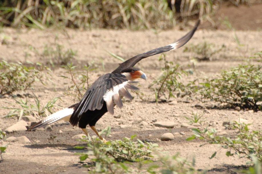 Bird Lover's Morning - JC's Journeys - Costa Rica
