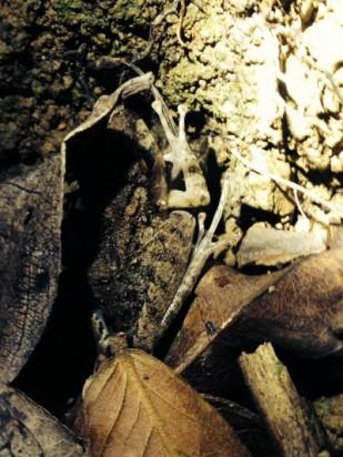 Nocturno Montezuma Night Hike - Frog - JC's Journeys