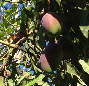 Tropical_Fruits_Costa_Rica_JCsJourneys