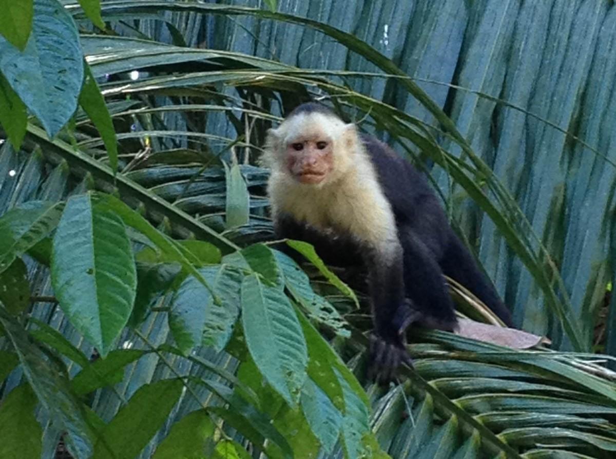 Curu Nature Escape - JC's Journeys - Costa Rica