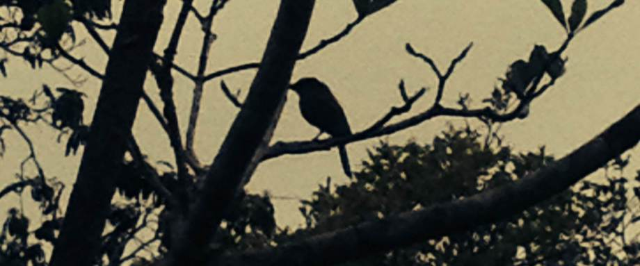 Nocturno Montezuma Night Hike - Bird