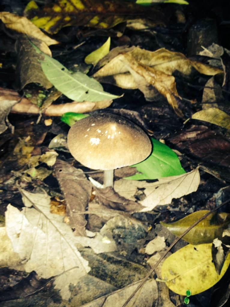 Nocturno Montezuma Night Hike - Mushroom2