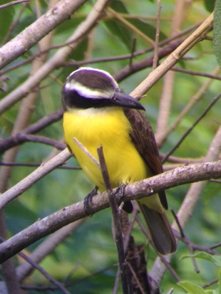 Birding in Montezuma Costa Rica - JC's Journeys
