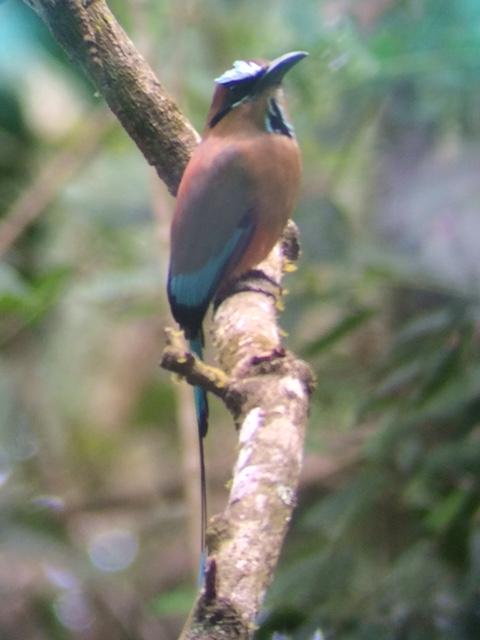 Bird Lover's Morning - Montezuma - Bird Sightings
